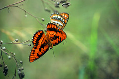 butterfly (sibi ar ( I'm BACK :)) Tags: butterfly canon20d sibi anawesomeshot platinumheartaward