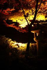 (ddsnet) Tags: autumn plant leaves japan night kyoto shot nightshot sony autumnleaves views   nippon    nocturne autumnal nihon 900  backpackers night        shot kytoshi kyotofu  leaves autumn night autumn  japan japan leaves 900 shot      nightviewsinjapan