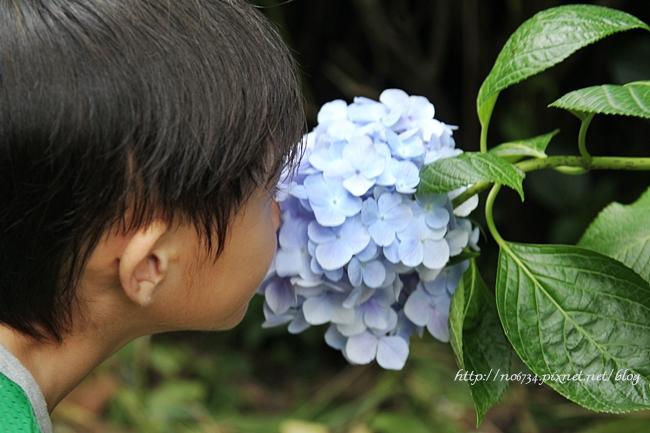 20110612_YangMingMtFlowe_0149 f