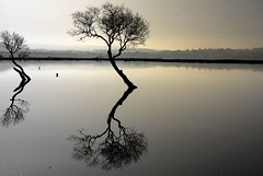 Simply Nature (Nicolas Valentin) Tags: reflection tree nature water scotland scenery calm lochlomond 1nv