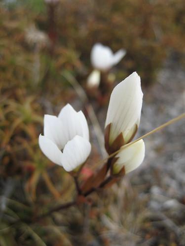 fall flowers - Tongariro