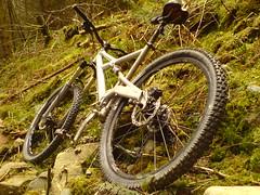 Tarw (Olly Hodgson) Tags: bike wales k750i mountainbike biking cannondale prophet coedybrenin tarw