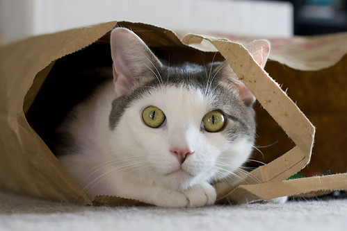 Ham in a Bag