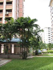 vetchia_merilli (rhmn) Tags: palms singapore manila plans ideas landcaping merilli vetchia