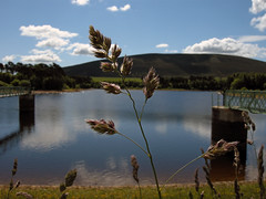 Harlaw Reservoir (C.W. Thomas) Tags: grass closeup scotland nikon edinburgh reservoir blueribbonwinner harlaw anawesomeshot aplusphoto anythingdigital goldstaraward p5100