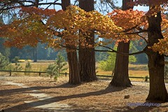 Yosemite - Black Oaks Fall In Yosemite (Darvin Atkeson) Tags: california park desktop wallpaper orange usa black color fall nature pine america forest outdoors us oak nikon photographer d70 screensaver outdoor nevada scenic meadow conservation sierra size pines national valley yosemite preserve protect watcher naturephotography darvin wallpapersize  outdoorphotography  atkeson californiaphotography outdoorphotographer  darv californiaphotographer   liquidmoonlightcom liquidmoonlight darvinatkeson