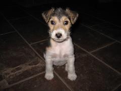 Guau! (javi270270) Tags: dog puppy perro cachorro perrito blueribbonwinner