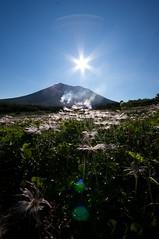 旭岳と朝日とチングルマ