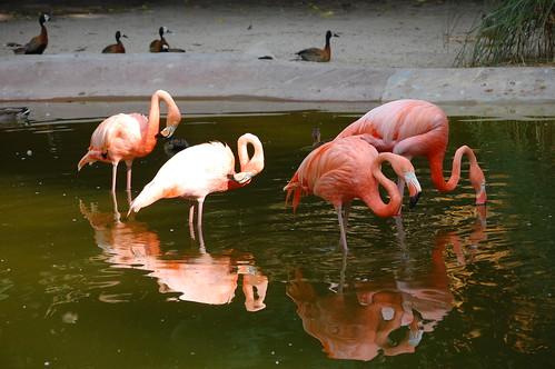 zoo 139