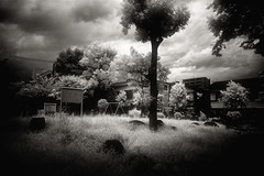 the Unforgettable Fire (TommyOshima) Tags: summer japan voigtlander f45 infrared epson 1945 15mm swh hoya theunforgettablefire digitalir superwideheliar rd1s rm72