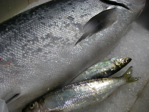 salmon and herring