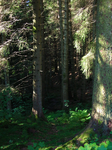Forest on Mt. Floyen