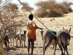 Enfant à Tombouctou (clodyus) Tags: voyage travel sahara niger desert delta mali tombouctou touareg intérieur intrieur