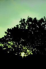 Rise (chobacabra) Tags: window silhouette sunrise 50mm nikon f14 screen d200 nikkor treeline 50mmf14 screenwindow nikkor50mmf14 nikond200 project365 nikkorf14
