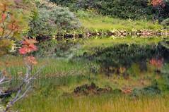 緑沼の水面