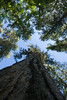 Looking up ... (absencesix) Tags: campground evergreens hasmetastyletag hellscanyon0727292008 joseph lakewallowastatepark lakewallowastatepark07282008 locale locations lookinguplowvantagepoint nature northamerica oregon perspective pinetrees plants summer2008travel travel trees unitedstates usa geo:state=oregon geo:city=joseph camera:make=canon exif:model=canoneos30d exif:lens=100200mm exif:aperture=ƒ90 exif:iso_speed=200 exif:focal_length=10mm camera:model=canoneos30d geo:countrys=usa exif:make=canon 180secatf90 10mm 1020mm canoneos30d iso200 noflash unknownmode 2008 july july282008 selfrating2stars josephoregonusa subjectdistanceunknown