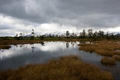 雲の中のトムラウシ山