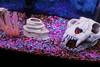 Neon Gravel (dwightsghost) Tags: aquarium neon fluorescent fishtank tacky gravel ruined fluorite seachem