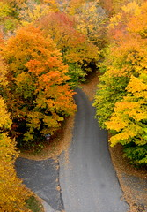 road to nowhere (Hot Lava) Tags: road autumn trees leaves wisconsin october fallcolors 2008 birdseyeview doorcounty peninsulastatepark forkintheroad eagletower fallfoliageseason