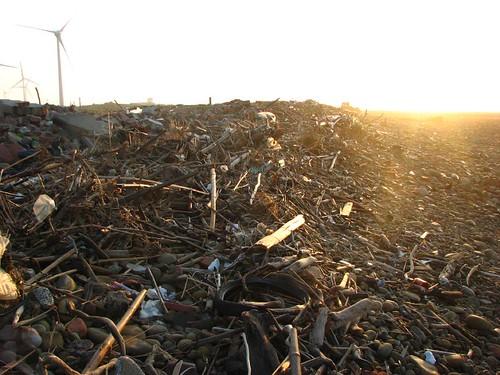 漂流木與垃圾 (2)