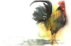 Key West (Jennifer Kraska) Tags: art birds watercolor jennifer rooster kraska