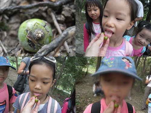 你拍攝的 4嚐柿子。