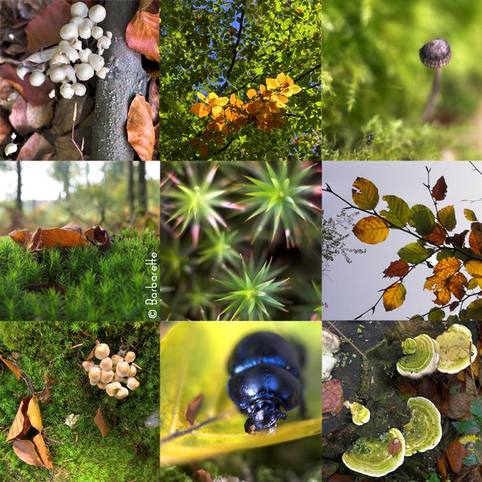polyptique-automne