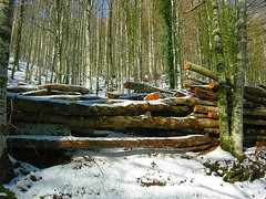 Urkiaga nieve maderos (quintoreal) Tags: navarra eugi urkiaga quintoreal