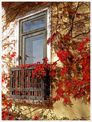 Small balcony with autumnal ivy (Vestaligo) Tags: autumn red color rot fall window austria sterreich europe balcony herbst ivy farbe soe takeabow loweraustria blueribbonwinner reichenau supershot bej golddragon mywinners platinumphoto isawyoufirst citrit overtheexcellence damniwishidtakenthat dragondaggerphoto thalhof