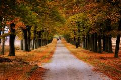 Walk Your Way into Autumn (buteijn) Tags: autumn herfst ede beukenlaan