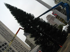 christmas under construction (_melika_) Tags: sanfrancisco birthday friends vacation food shopping cupcakes chinatown cookie farmersmarket gucci cupcake castro happybirthday powell ferrybuilding macys streetcar unionsquare sanfranciscoca prada chanel frisco thaifood louisvuitton miette kingofthai miettepatisserie peniscookie sonya415 bayareal thehotcookie chocolatepeniscookie