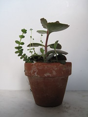 IMG_0162 (Plantules) Tags:
