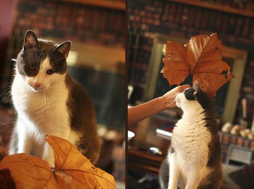 leo&leaf diptych