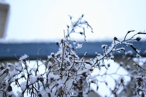 erster schnee 01