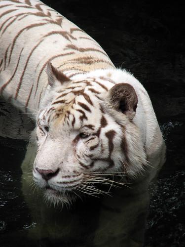 singapore_zoo_06
