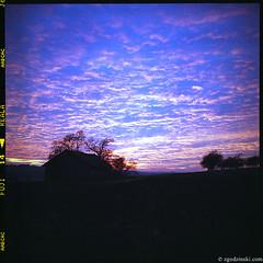 Fancy sunset near Cracow (11.2008) (zgodzinski) Tags: sunset sky 6x6 tlr film field mediumformat landscape poland krakow cracow f28 silverfast krakoff rolleiflex28d carlzeissplanar80mmf28 autaut heidosmat fujicolorsuperiareala100 canoncanoscan8800f