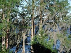 lake story 018 (shankargallery) Tags: landscapes nikon piers northcarolina lakeside spanishmoss lakescapes lakewaccamaw shankargallery richardlazzara clustershotcom