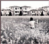 Camera oscura  ~~ Colza a psm ~~ (Sara ~ I?) Tags: bw primavera monocromo pentax ve pixie io campo biancoenero psm 135mm caorle colza pentaxkx stampa cameraoscura heartawards baritata lens135mm solobn cartabaritata italiangirlsphotographers trapiaveelivenza