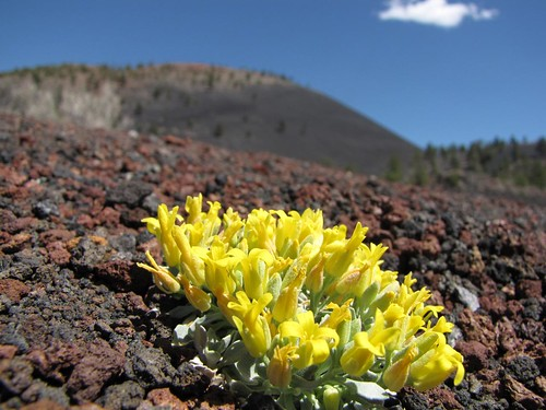 Sunset Crater Natl Monument-2