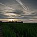 Dawn Dew Photo 18
