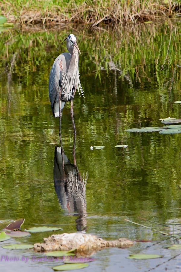Everglades National Park (29 of 40)