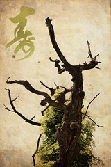 Ancient Tree (j. kunst) Tags: china old tree museum garden character chinese beijing palace imperial longevity   forbiddencity gugong peking peoplesrepublicofchina palacemuseum imperialgarden zhongguo yuhuayuan amcient