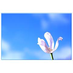 blue sky (colinmurray) Tags: photofaceoffwinner