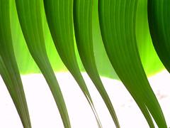 SSSSS (...anna christina...) Tags: travel flowers blue light sunset sea summer brazil plant flower macro green beach nature water brasil garden cores flora plantas natural live natureza paisagem viagens lanscape annachristina allxpressus obliquemind obliquamente annachristinaoliveira
