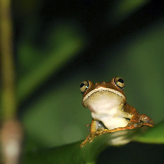 How U doing? (lRoda) Tags: green nikon nightshot farm frog d200 r nikkor50mmf14ai animalkingdomelite aleroda anawesomeshot