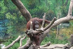 新竹市立動物園22