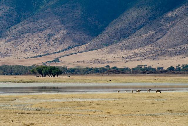 Zebras at Lake Magadi