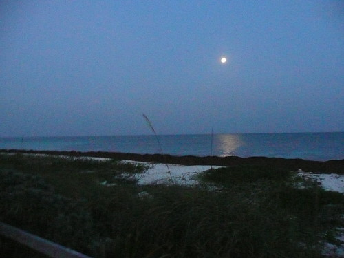 moonshine on the beach