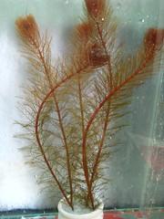 Thủy Sinh Tuấn Anh-Chuyên cây & Rêu Thủy Sinh, Cá Cảnh Biền & Hồ Cá Cảnh Biển - 32