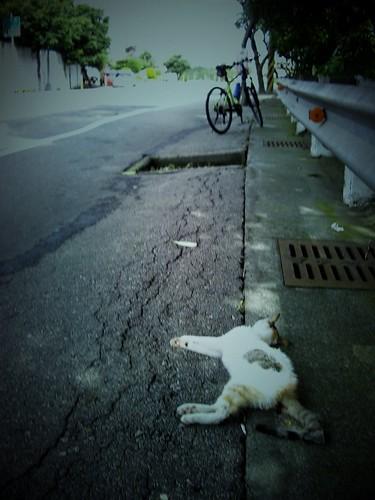 deadcat2